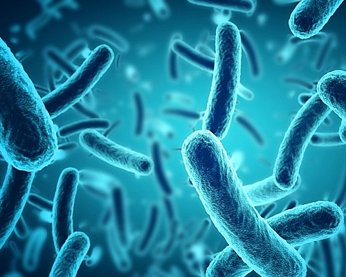 The Role of Bacteria in Your Septic System